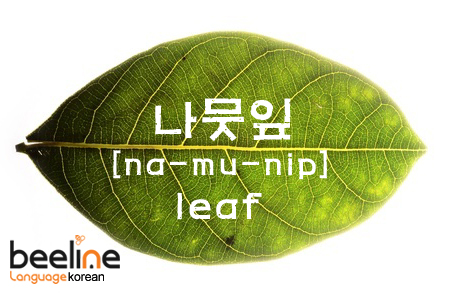 Korean words: learn Korean with pictures