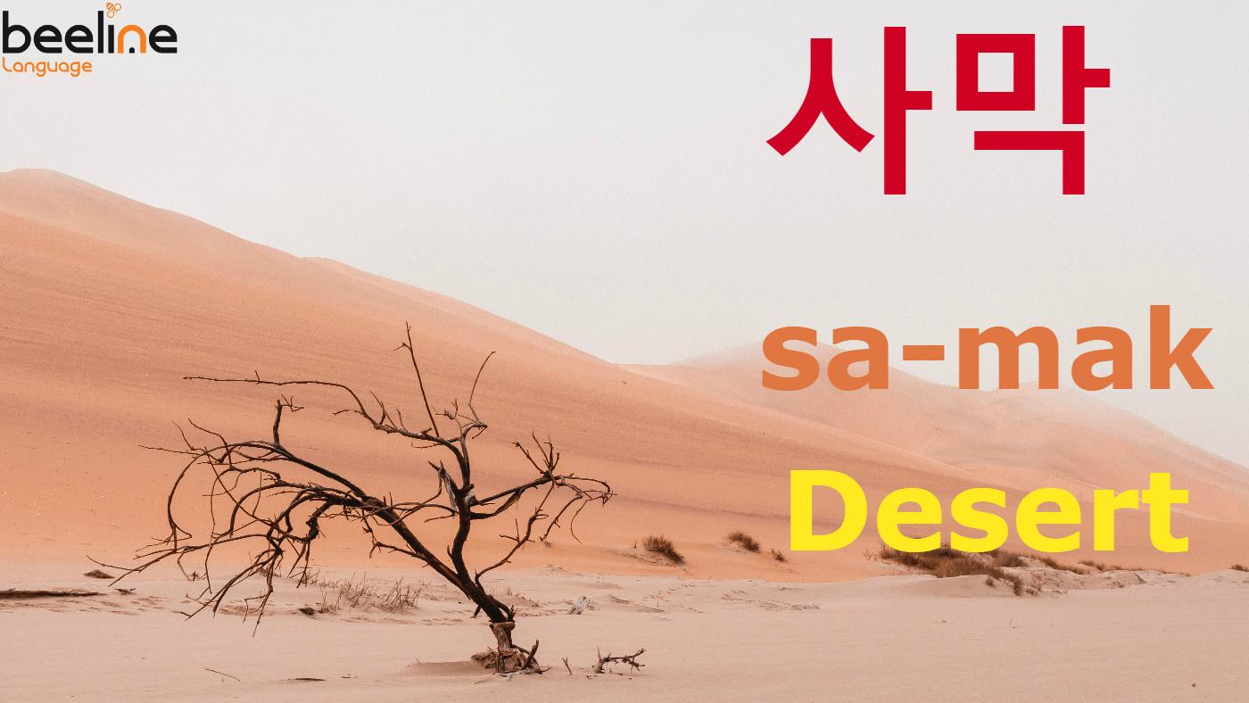 how to say desert in Korean