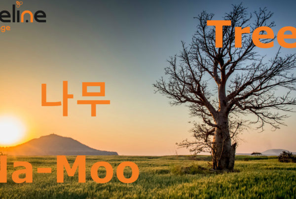 how to say tree in korean